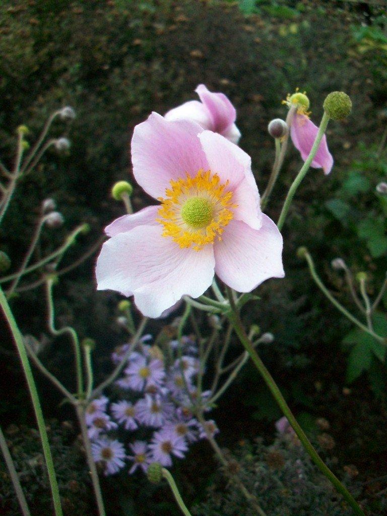 Fleurs... 100_9531-768x1024